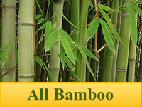 Bamboo Plants - All