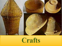 Bamboo Plants for Crafts