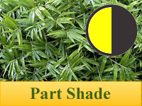 Bamboo Plants for Part Shade
