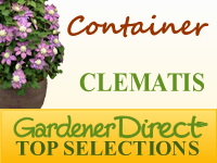 Clematis for Container Gardens