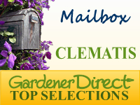 Clematis for the Mailbox