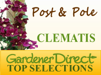 Clematis For Posts & Poles