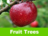 Fruiting Trees