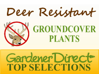 Groundcover Plants - Deer Resistant