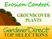 Groundcover Plants - Erosion Control