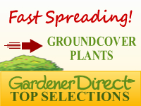 Groundcover Plants - Fast Spreading