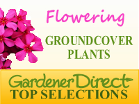 Groundcover Plants - Flowering