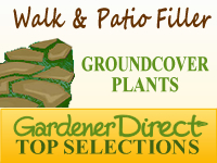 Groundcover Plants - Gap & Crevice Fillers