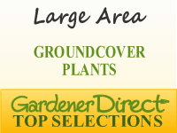 Groundcover Plants - Large Area