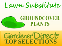 Groundcover Plants - Lawn Substitute
