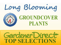 Groundcover Plants - Long Blooming