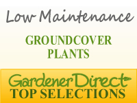 Groundcover Plants - Low Maintenance