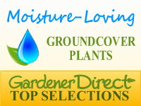 Groundcover Plants - Moisture Loving