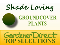 Groundcover Plants - Shade Loving