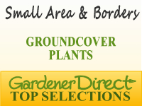 Groundcover Plants - Small Areas & Borders