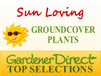 Groundcover Plants - Sun Loving