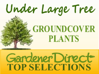 Groundcover Plants - Under Shade Trees