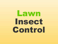 Insect Control - Lawn