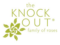 Knock Out Rose Series