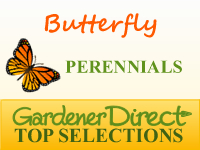 Perennials for Attracting Butterflies