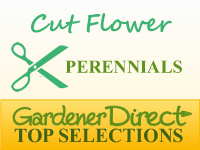 Perennials for Cut Flowers & Foliage