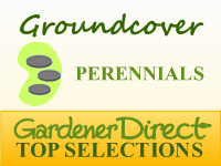 Perennials for Groundcover or Crevices