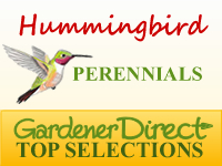 Perennials for Attracting Hummingbirds