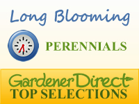Perennials - Long Blooming