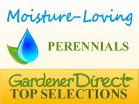 Perennials - Moisture Loving / Bog Plants