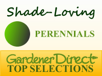 Perennials - Shade Loving