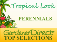 Perennials - Tropical Look