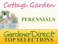 Perennials for Cottage Gardens