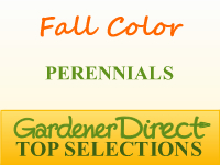 Perennials for Fall Color