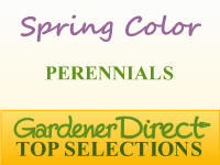 Perennials for Spring Color