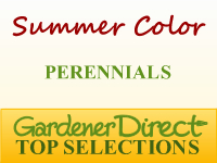 Perennials for Summer Color