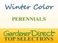 Perennials for Winter Color