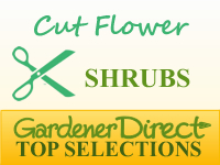 Shrubs for Cut or Dried Flowers