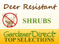 Shrubs - Deer Resistant