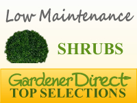 Shrubs - Low Maintenance