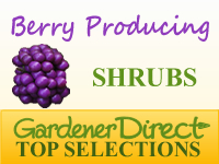 Shrubs - Berry Producing