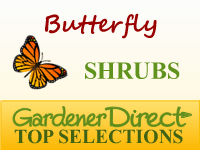 Shrubs - Butterfly Attracting