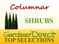 Shrubs - Columnar & Narrow