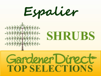 Shrubs for Espalier