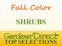 Shrubs for Fall Color