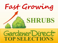 Shrubs - Fast Growing