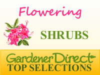 Shrubs - Flowering