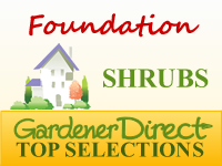 Shrubs - Home Foundations