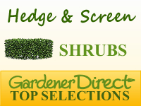 Shrubs - Hedge or Screen