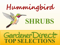 Shrubs - Hummingbird Attracting