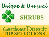Shrubs - Unique & Unusual